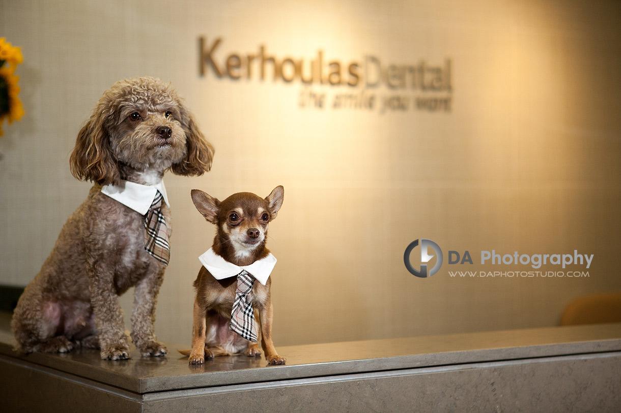 Niko & Chino ready for you at the reception desk - DA Photography