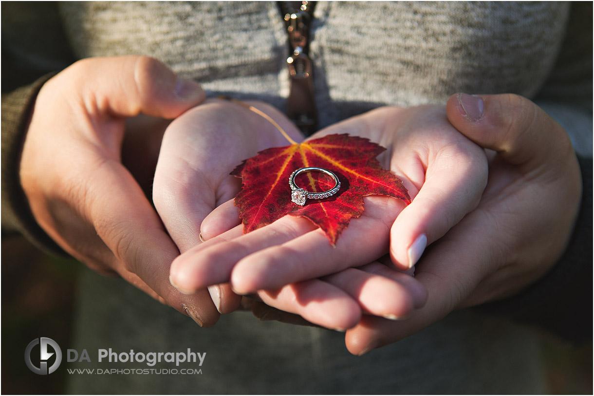 Best Fall Engagement Photographers in Muskoka