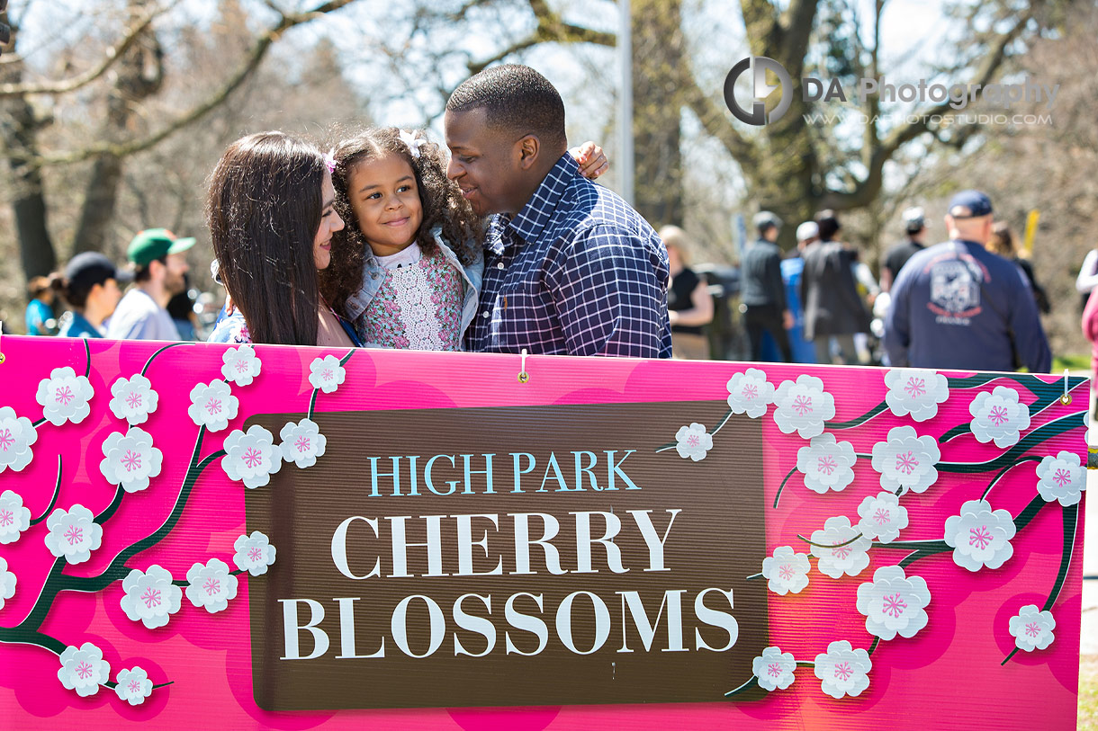 High Park cherry blossoms photo